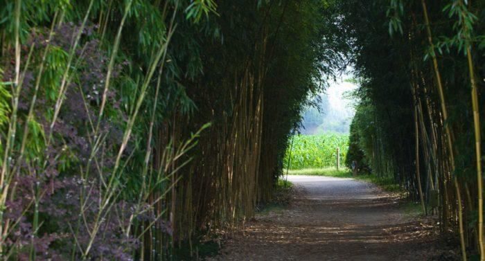 Camping Le Paradis - Images - Bambou